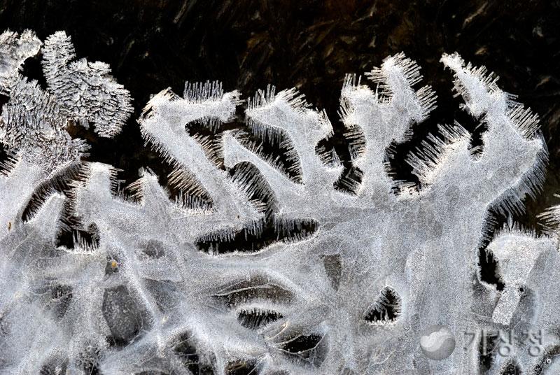 얼음 촉수