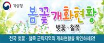 봄화개화현황 (벚꽃, 철쭉)